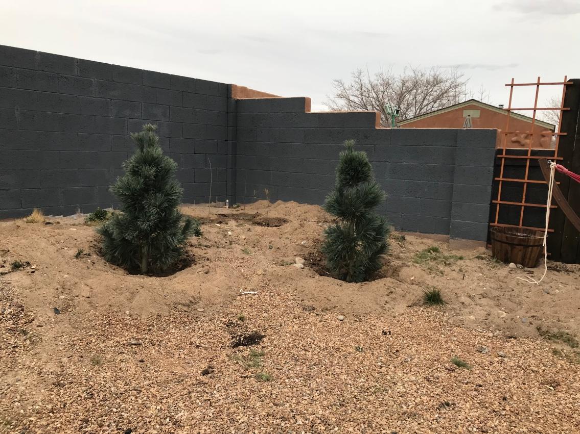 trees backyard 1